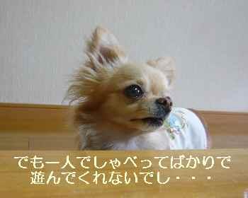 blog2010062302.jpg