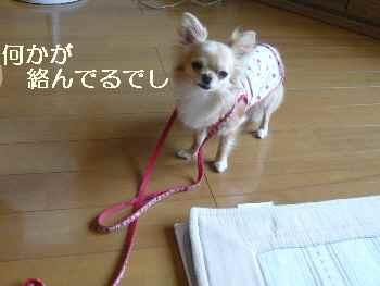 blog20100624.jpg