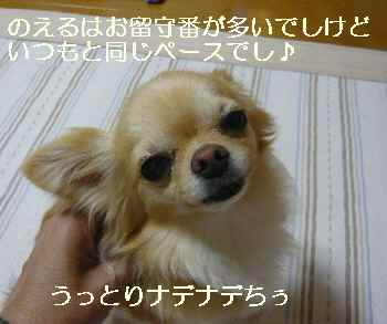 blog2010062501.jpg