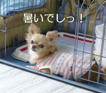 blog2010062801.jpg