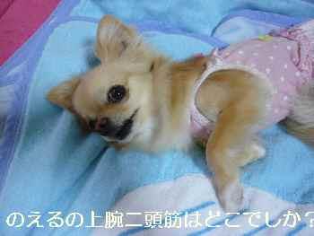 blog2010070201.jpg