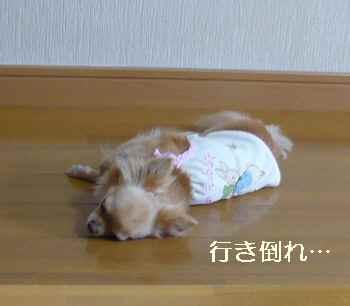 blog2010070602.jpg