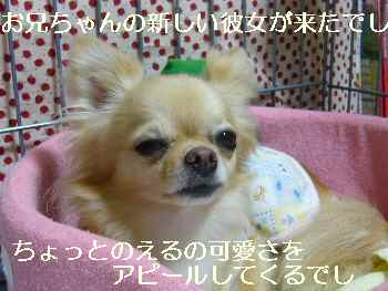 blog2010070902.jpg