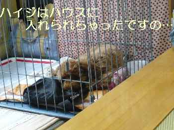 blog2010071302.jpg