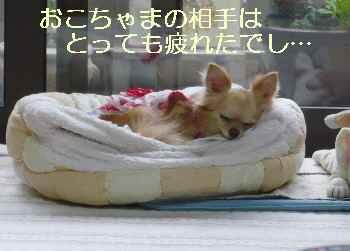 blog2010071303.jpg