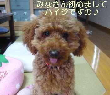 blog2010071304.jpg