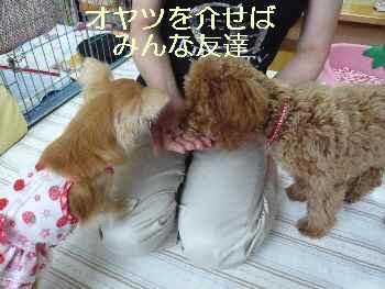 blog2010071309.jpg