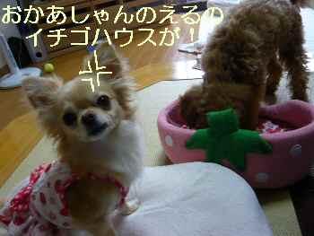 blog2010071310.jpg