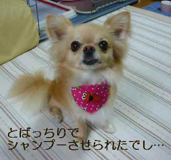 blog2010071404.jpg
