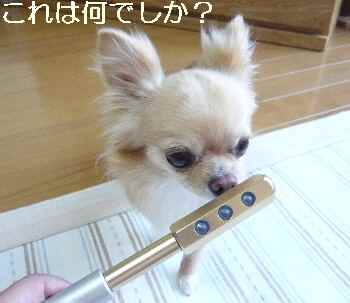 blog2010071703.jpg