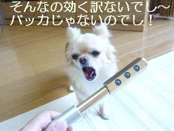 blog2010071704.jpg