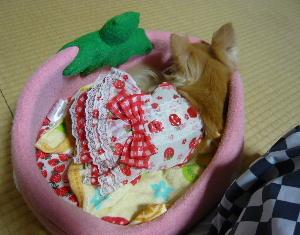 blog2010072003.jpg