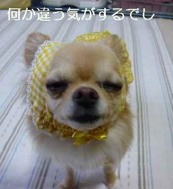 blog2010072202.jpg
