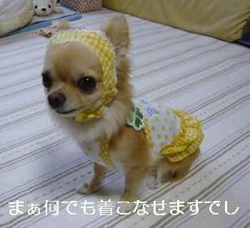 blog2010072203.jpg
