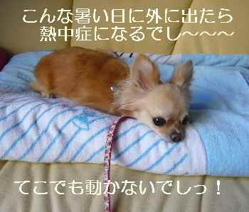 blog2010072301.jpg