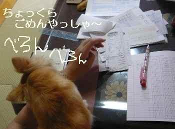 blog2010072504.jpg
