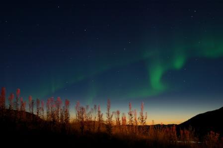 薄明の中のヤナギランと北の空のオーロラ