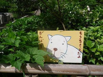 fukujyuji2.jpg