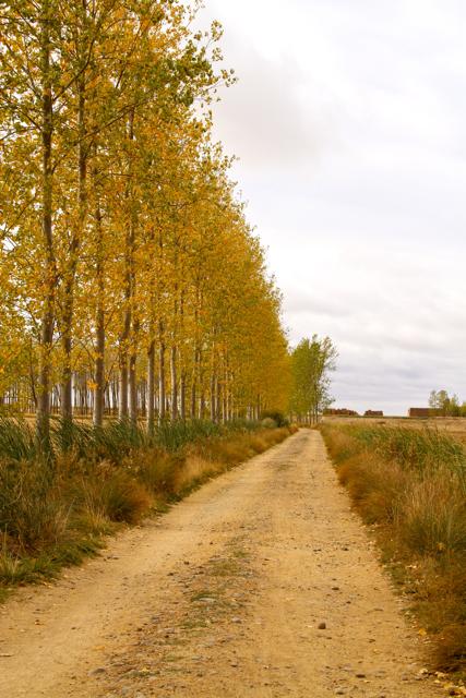 Camino de Santiago Day 15 - 30
