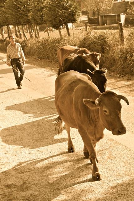 Camino de Santiago Day 30 - 36