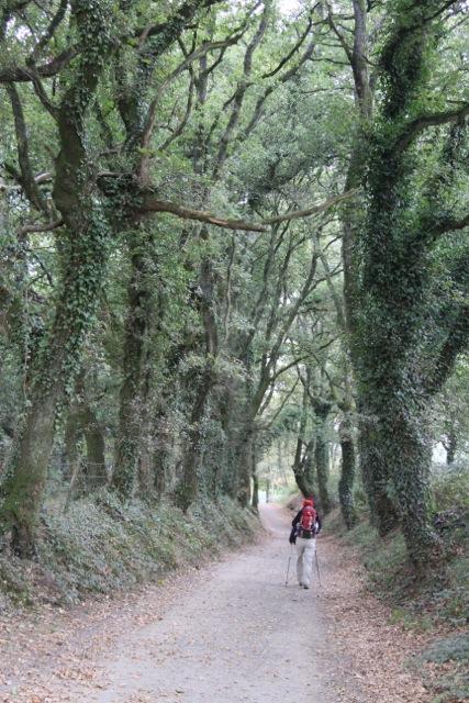 Camino de Santiago Day 31 - 06