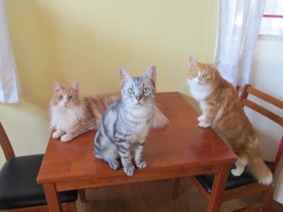 テーブルの上にネコ