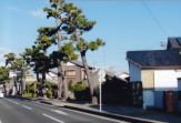 東海道松並木・薬師町