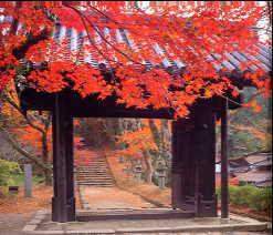 秋月城・黒門