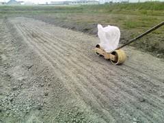 玉葱 播種