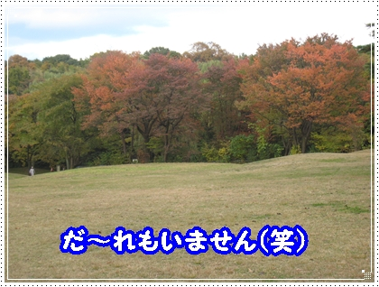 dc112115 - コピー