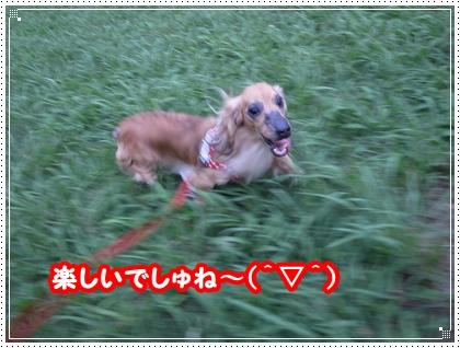 dc071805.jpg