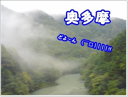dc110504.jpg