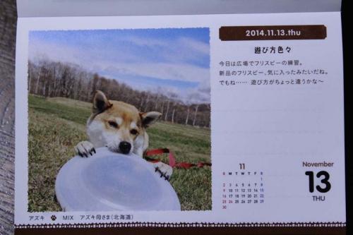 IMG_0072_AZUKI.jpg