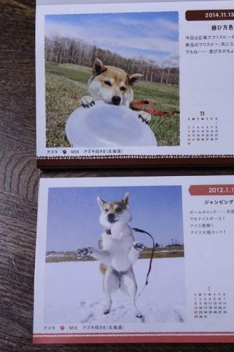IMG_0074_AZUKI.jpg
