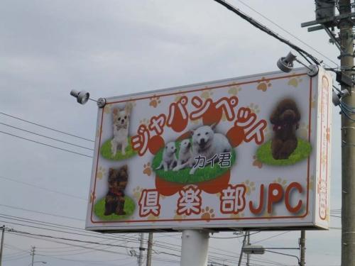 P1150432+AZUKI.jpg