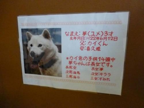 P1150444+AZUKI.jpg