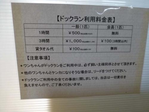 P1150459+AZUKI.jpg