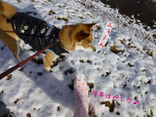 P1150662_AZUKI.jpg