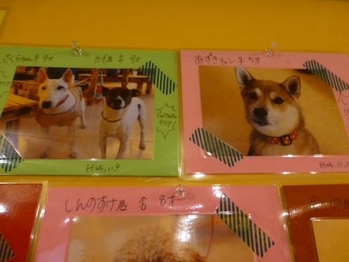 P1150777_AZUKI.jpg