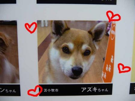 P1250439-AZUKI.jpg