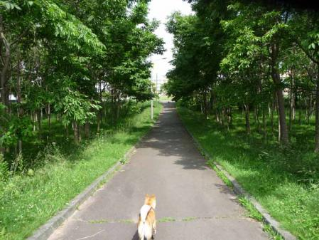 P1250735-AZUKI.jpg