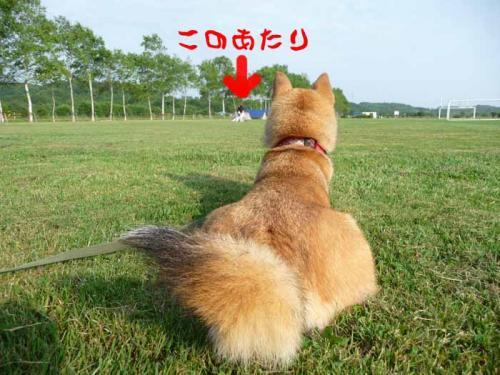 P1260080-AZUKI.jpg