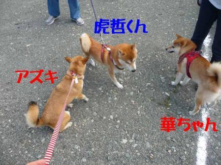 P1260508-AZUKI-.jpg