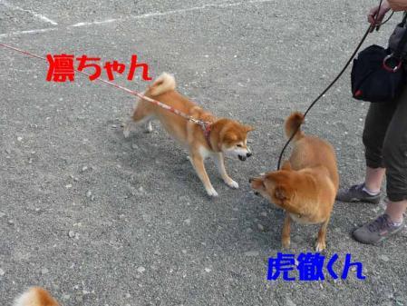 P1260512-AZUKI-.jpg