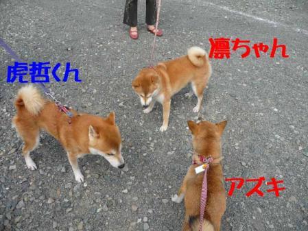 P1260517-AZUKI-.jpg