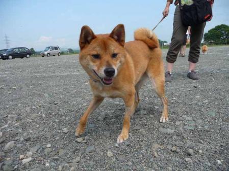 P1260519-AZUKI.jpg