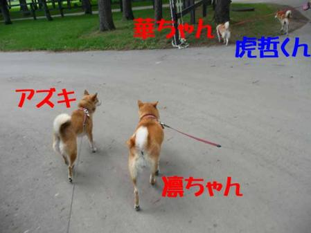 P1260538-AZUKI-.jpg