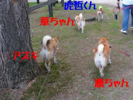 P1260539-AZUKI-.jpg