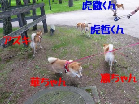 P1260540-AZUKI-.jpg