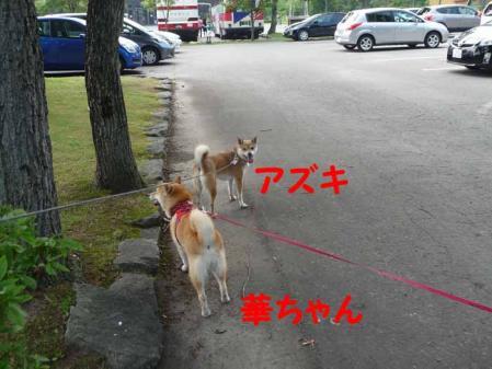 P1260552-AZUKI.jpg